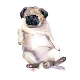 Sad Watercolor Dog. Pug dog illustration. Template for gift certificate. Mock up.International homeless animals day.Pets adoption. Concept. Flayer, poster Royalty Free Stock Photography