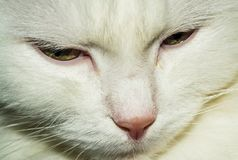 Sad white cat stock photos
