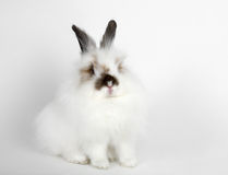 Sad white rabbit Stock Images