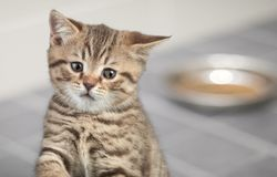 Sad young cat sitting near food bowl Royalty Free Stock Photo