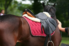 Saddle. Riding horse with Saddle Stock Photos
