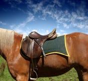 Saddle. A saddle on the horse royalty free stock image