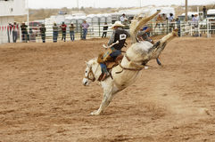 Saddle bronc 1 Royalty Free Stock Image