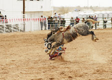 Saddle bronc 2 Royalty Free Stock Photography