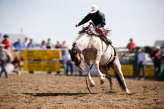 Saddle Bronc stock photos
