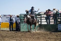 Saddle Bronc Royalty Free Stock Images