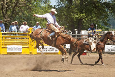 Saddle Bronc Royalty Free Stock Photo