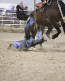 Saddle Bronc Fail. Saddle bronc rider falling off horse Royalty Free Stock Photos