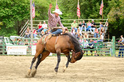 Saddle bronc Royalty Free Stock Photography