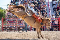Free Saddle Bronc Riding, Bareback Riding. Bull Riding Competition. Cowboy Steer Wrestling, Team Roping, Tie-down Roping. Barrel Riding Royalty Free Stock Image - 170544416