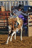 Saddle bronc riding in Dupree royalty free stock photography