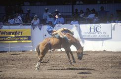 Saddle Bronco riding, Santa Barbara Old Spanish Days, Fiesta Rodeo, Stock Horse Show, Earl Warren Showgrounds, CA Stock Images