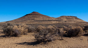Saddle Butte. Rabbit Brush and Saddle Butte Stock Photography