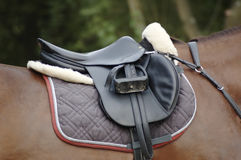 Saddle on a horse. Saddle on a brown horse Royalty Free Stock Images