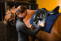 Saddle a horse. Woman saddle a horse in the stall Royalty Free Stock Image