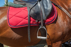 Saddle horse Royalty Free Stock Photography