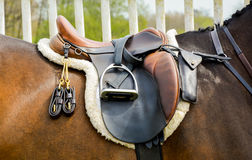 Saddle on horse Royalty Free Stock Images