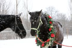Saddle horse wearing beautiful colorful christmas wreath at advent weekend in the fresh snow. Dreamy christmas image of asaddle horse wearing a beautiful wreath stock images