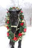 Saddle horse wearing beautiful colorful christmas wreath at advent weekend in the fresh snow. Dreamy christmas image of asaddle horse wearing a beautiful wreath stock photography