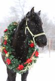Saddle horse wearing beautiful colorful christmas wreath at advent weekend in the fresh snow. Dreamy christmas image of asaddle horse wearing a beautiful wreath royalty free stock photography