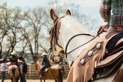 In the saddle horse on Western race, beautiful paint horse in a barrel racing event at a rodeo. stock photography