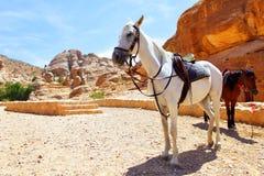 Saddle horses Royalty Free Stock Photo