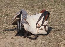 Saddle riding Stock Image