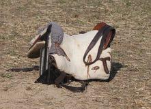 Saddle riding Stock Image