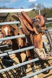 The saddle Royalty Free Stock Photo