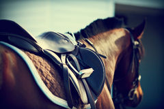 Saddle with stirrups. On a back of a horse stock photo
