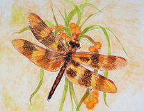Saddlebags Dragonfly illustration Stock Photography