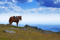 Saddled horse  in  mountains Stock Photo