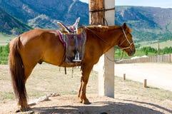 Saddled horse at tethering post stock image