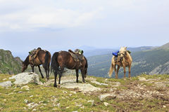 Saddled horse on top of ridge Iolgo Royalty Free Stock Photo