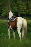 Saddled horse Stock Photos