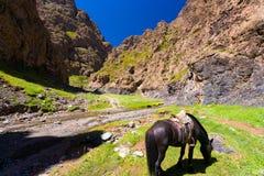 Saddled Horse Yolyn Am Eagle Valley Mongolia Royalty Free Stock Images