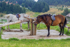Saddled horses with pigtails ready for riding Royalty Free Stock Images