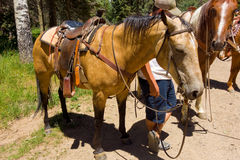 Saddled horses resting during a ride in the rocky mountains Royalty Free Stock Image