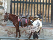 Saddled horses waiting for their riders Royalty Free Stock Photography