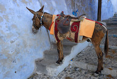 Saddled mule in Santorini, Greece Stock Image