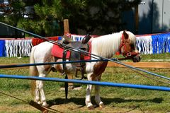 Saddled pony waiting for a carrousel rider. A pony with a saddle is attached to an arm of a carrousel for children to receive rides as a festival Royalty Free Stock Photos
