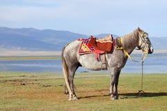 A saddled Tibetan horse at Qinghai Lake Stock Photo