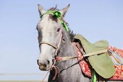 Saddled Tibetan horse waiting for the horseman Royalty Free Stock Photo