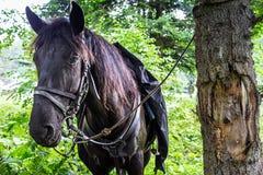 Saddled for trip black horse Stock Photos