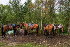 Saddled for trip horses Stock Images