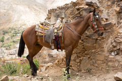 Saddled up Mexican horse. Saddled up tour horse in Real de Catorce Mexico Royalty Free Stock Image