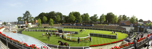 Saddling Paddock at Royal Ascot Royalty Free Stock Photos