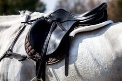 Saddlle del cavallo fotografie stock