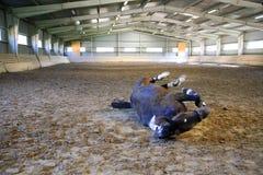 Sadelhästen lägger på baksida och hagyckel för att rulla i sand i en em Arkivfoton