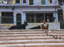 Sadhu och kor i Varanasi Royaltyfri Bild